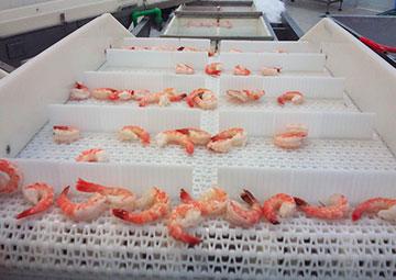 Conveyor Untuk Industri Seafood Dan Daging | Trindo Sukses Mandiri